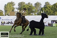 Horse of the Year Show 2013 - Part Two