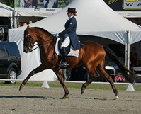 Horse of the Year Show 2013 - Part One