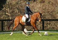 Dressage in New Zealand - A post Covid 19 story...